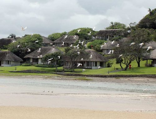 7 DAY YOGA BEACH RETREAT – UMNGAZI, SOUTH AFRICA.