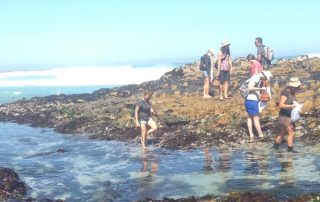 Foraging at the Cape Peninsula.