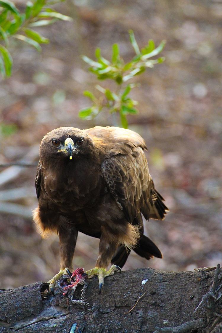 Kruger Birding.