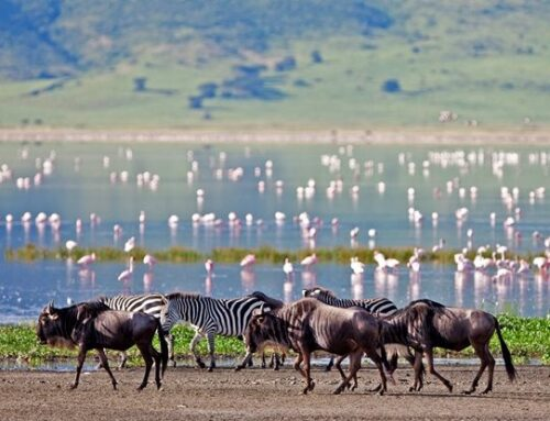 TOP 5 MUST SEE ANIMAL MIGRATIONS IN AFRICA